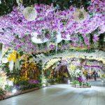 【2018年版】現地スタッフおすすめ!韓国のお花見スポット3選